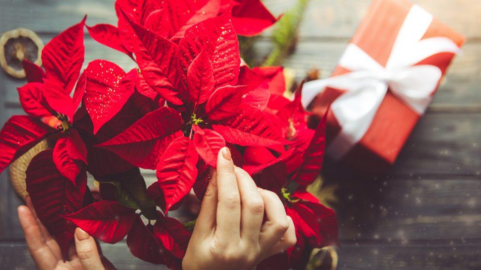 A közelgő ünnepek alatt se feledkezzen meg a virágküldésről!
